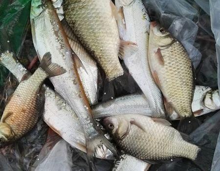 独行再战野塘,鱼获虽少解毒。 老鬼饵料钓翘嘴