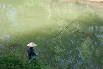 有关水情与钓鱼的谚语