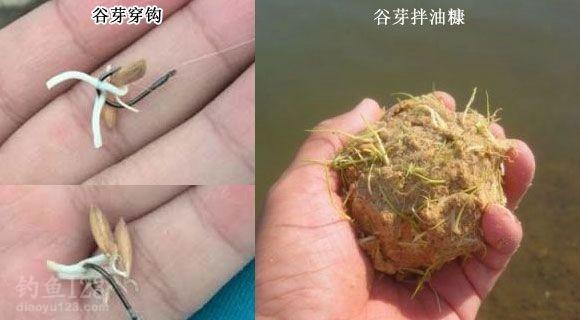 谷芽鱼饵垂钓草鱼