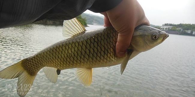 然后杠着鱼竿拎着鱼获,屁颠屁颠地一副凯旋而归的摸样回家。