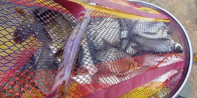 水库里鲫鱼不是没有,只是鳊鱼数量太多了,底部的鲫鱼就很难抢到鱼饵了