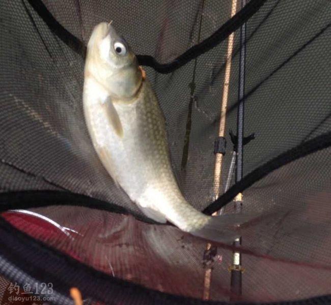 对于钓鱼人来说自然是要把这段时间