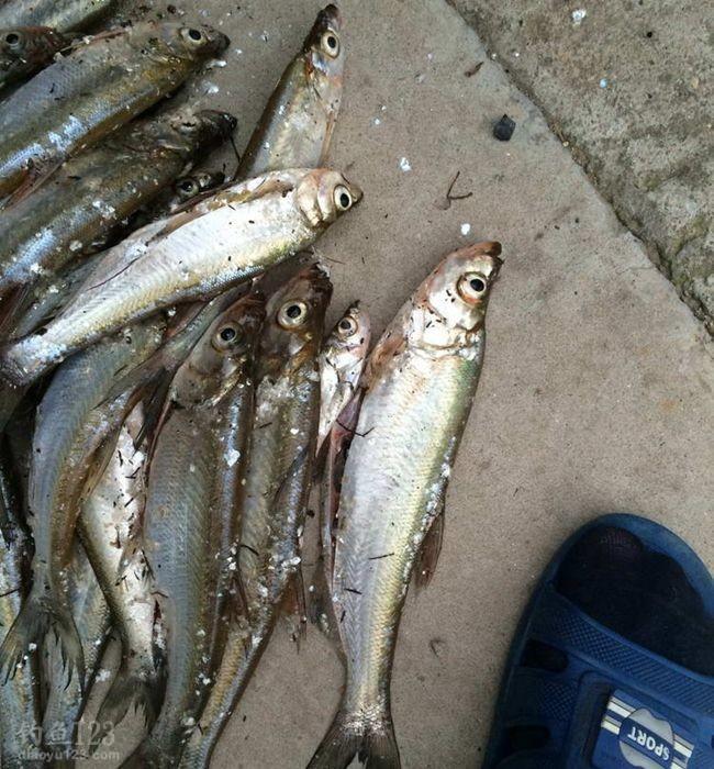 龙墩水库的鱼儿对饵料非常的挑剔