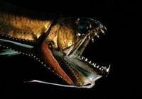 海钓爱好者无法钓到的数十种海洋深处罕见怪鱼