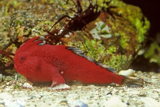 海洋深處的罕見魚類