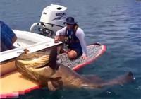 《海钓视频》 男子坐滑板海钓获得巨型石斑