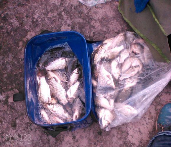 一下午,两人的总渔获,真开心啊