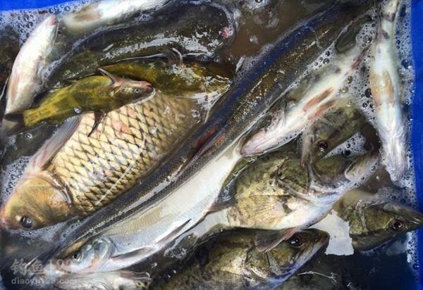 鱼获还是相当不错的