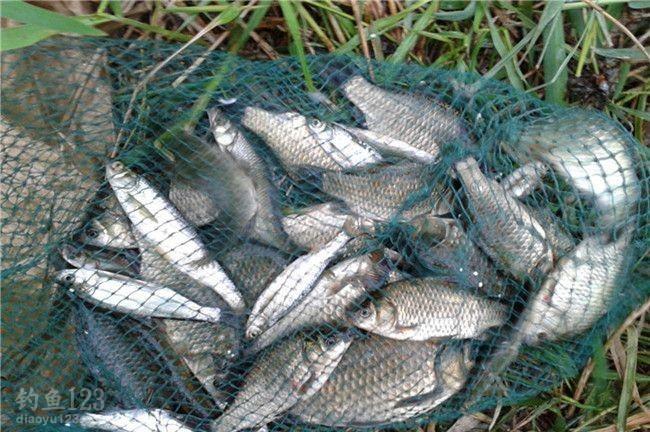 虽然只有小3斤鱼,经历了持续的低迷,感觉还是不错的