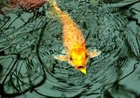 《邓刚钓鱼视频》 第03集 钓鲤鱼教学视频