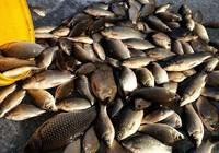 涨水鱼落水虾河水初涨钓鲫忙