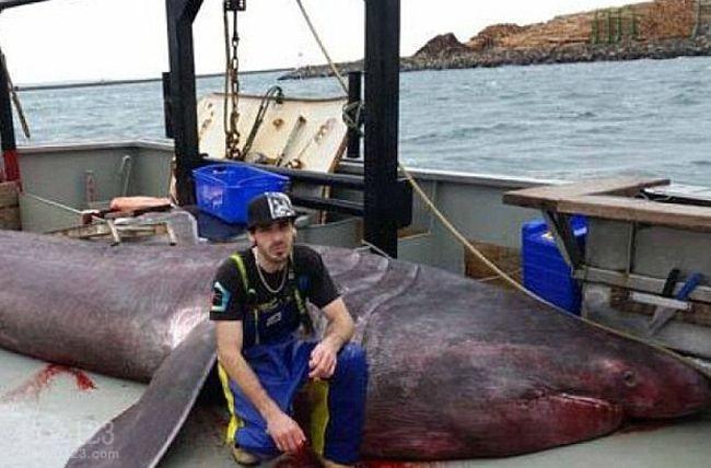澳洲渔民捕获3吨巨型姥鲨赠与博物馆