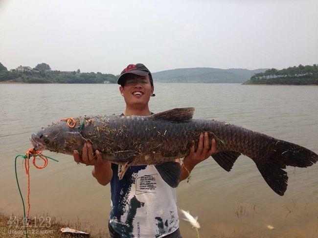 3斤左右以下的鲤鱼全都不入鱼护