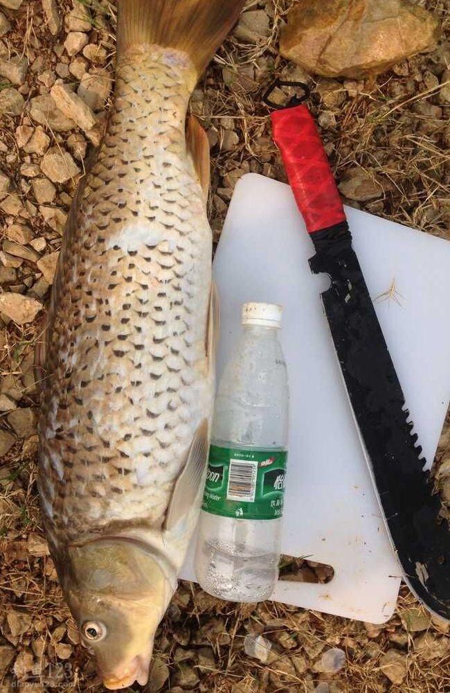 此次前来主要是针对大一点的鱼