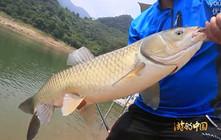 李大毛《游钓中国》第43集 探钓别山湖底层米级大草鱼