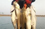 冬季低溫路亞大鱸魚和翹嘴