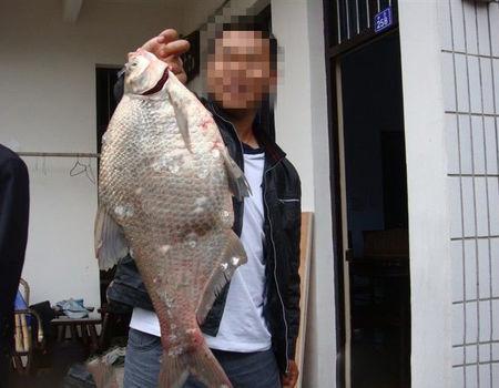 江河海竿爆炸钩大风天气爽钓鲻鱼和鳊鱼