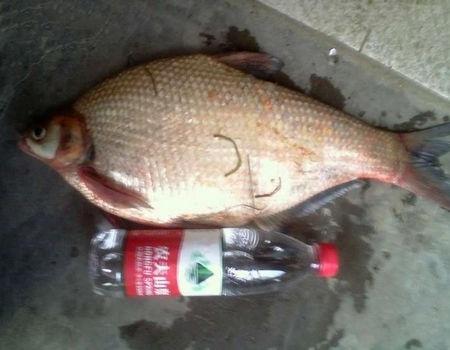 夏季雨天大湖垂釣大鳊魚