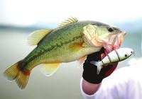 分享路亚七星鲈鱼的拟饵选择经验和技巧