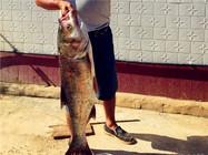 自然水库手竿钓浮收获超级大鲢鳙鱼
