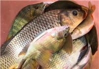 秋季在六枝牂牁江爆釣鯉魚