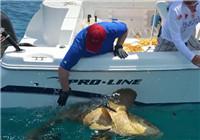 《海钓视频》 国外钓友深海钓获大石斑鱼
