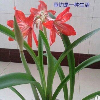 胡杨林12