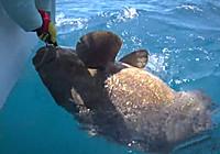 《海钓视频》 深刻体验海钓巨物的魅力