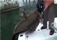 《海钓视频》 活鱼做饵钓获超级石斑鱼