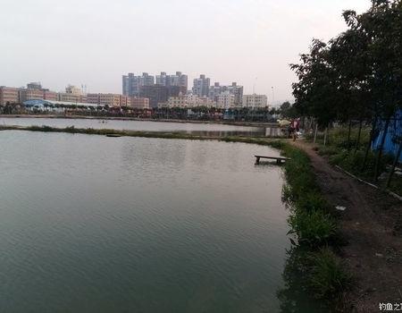 春天淡水乐园探青鱼!