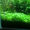 13小龙虾