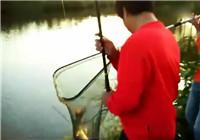 《垂钓对象鱼视频》 男子春季河边野钓收获大草鱼