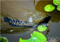 分享夏季路亚黑鱼的三个经验和技巧
