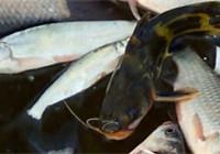 《媛来如此》第二季 盘锦红旗水库冰钓白条鱼