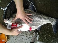 钓友总结的夏季库钓鳊鱼的技巧和经验