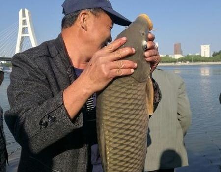 朝阳人工湖钓鱼区一位鱼友钓获19斤大鲤鱼 龙王恨饵料钓鲤鱼