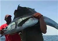 《海钓视频》 男子手把线海钓连获大旗鱼