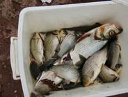 冬季湖边垂钓两天两夜钓获六斤重大翘嘴