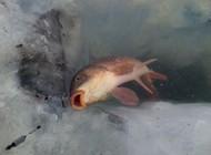 冰钓野狼湖鲤鱼钓满护