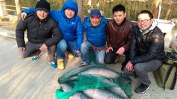 黑坑垂釣大青魚三人釣獲100斤