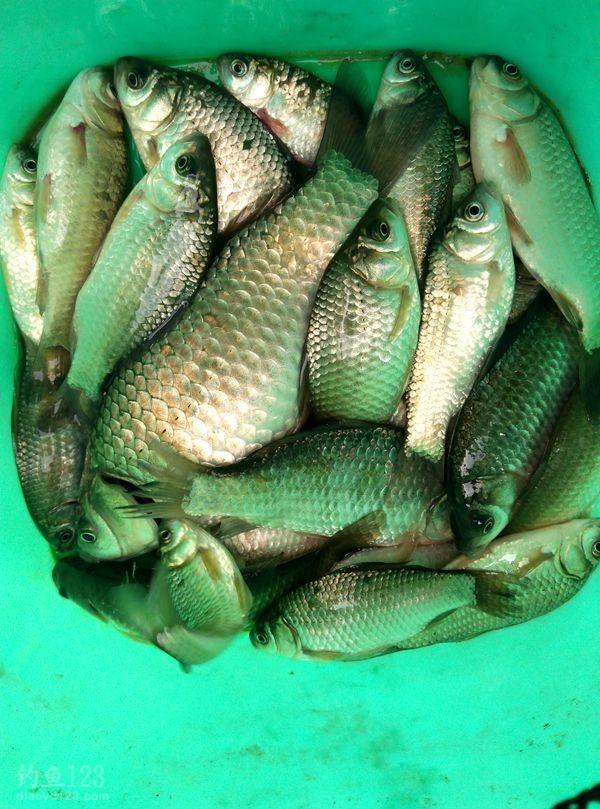 渔获很丰富