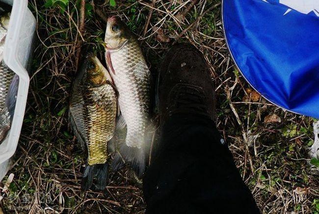 水的温度下降,适合鱼在这季节生活的自然规律