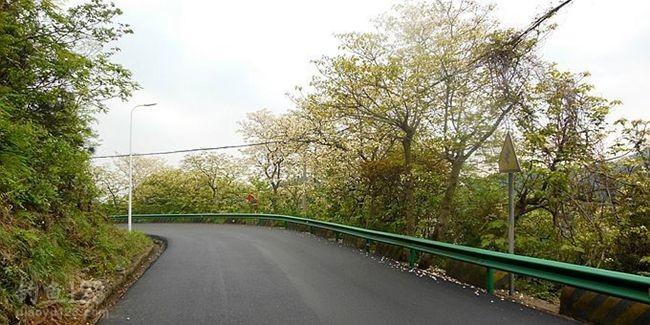 春季,让回家的路更美丽。