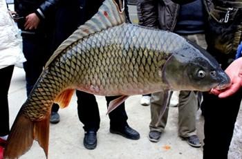 《渔我同行》第281集 大成水库钓获野生大鲤鱼