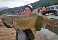 水库钓获43斤大草鱼,邀请众钓友品尝全鱼宴