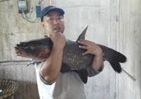 钓大鱼不是梦,出战万峰湖擒获大青鱼、大草鱼超百斤