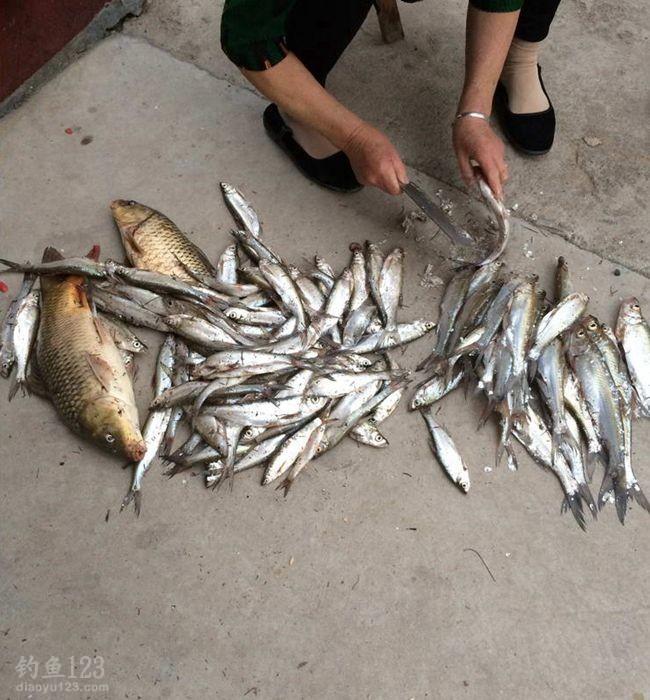 有图有真相,此回钓事的渔获总量