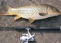 秋季钓鲤鱼的小技巧