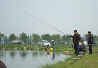 长竿短线钓鱼技巧