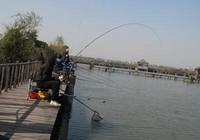 冬季釣魚的好餌料紅蟲